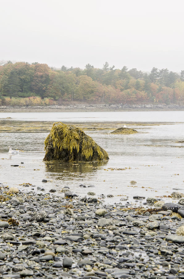 Bar Island in Bar Harbor, Maine. The natural land bridge sand bar at low tide that connects Bar Harbor, Maine and Bar Island in Acadia National Park at Autumn royalty free stock images