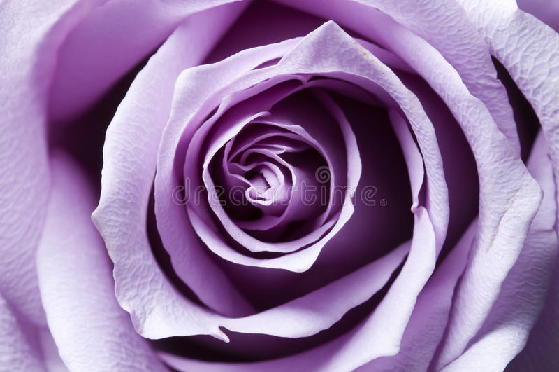 bara steg den öppnade purplen arkivfoton
