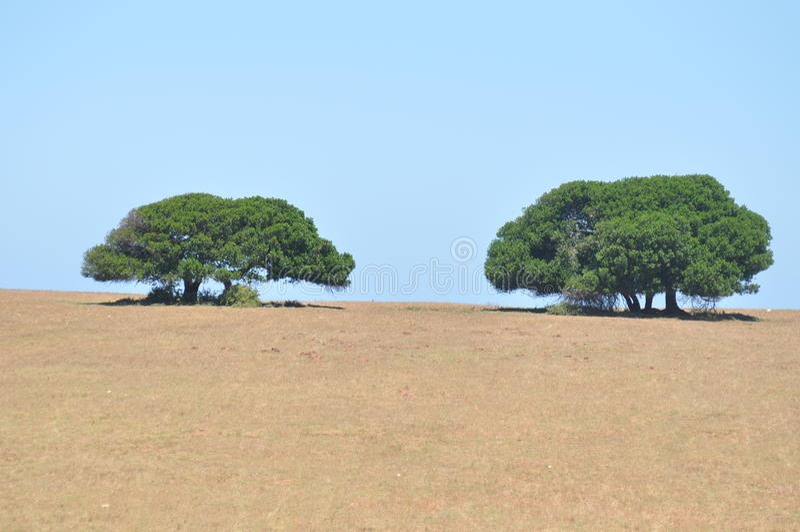 bara trees arkivbild