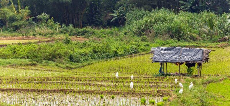baracca del paesaggio sull'orlo di una risaia fotografie stock libere da diritti