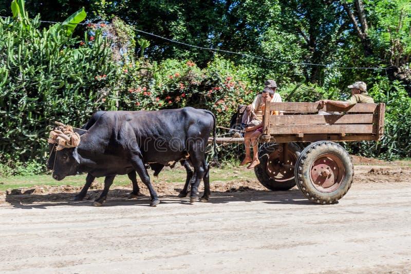 BARACOA, CUBA - 5 DE FEBRERO DE 2016: La gente monta un carro cerca de Baracoa, Cu del búfalo fotografía de archivo