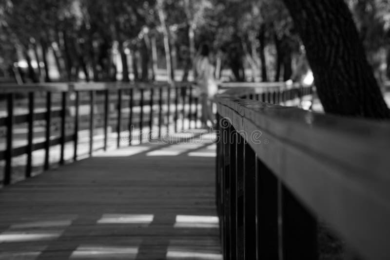 Barandilla de madera en parque público con el banco del césped y árbol verde, lugar para la relajación imagen de archivo