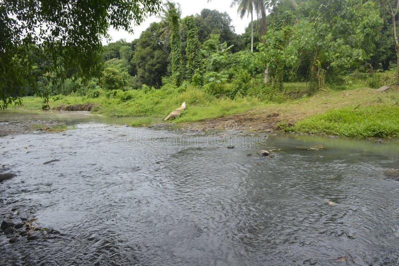 barangay Tiguman的Tiguman河, Digos市,南达沃省,菲律宾 库存图片