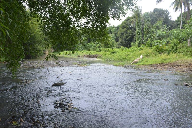 barangay Tiguman的Tiguman河, Digos市,南达沃省,菲律宾 库存照片