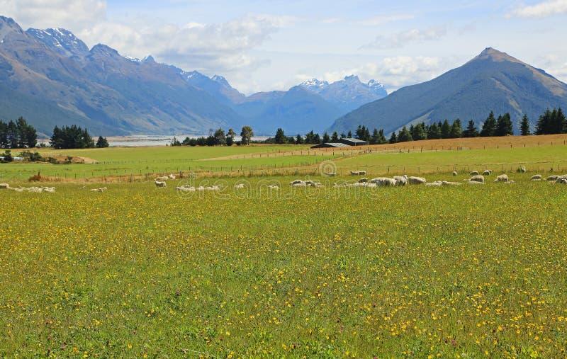 Barani i Południowi Alps zdjęcie stock