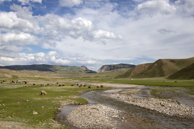 Barani pasanie na bankach rzeczny spływanie przez paśnika przeciw chmurnemu niebu z górami na horyzoncie obraz stock