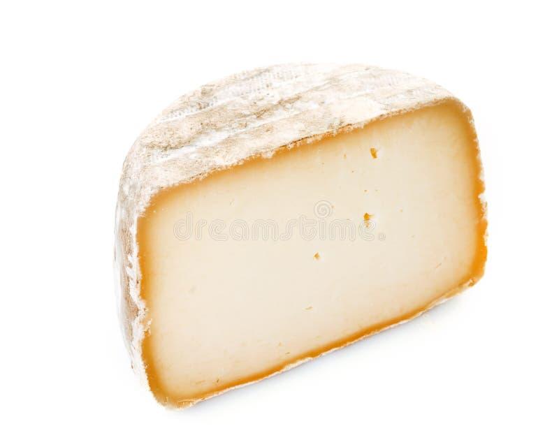 Barani ` s ser w studiu obrazy stock