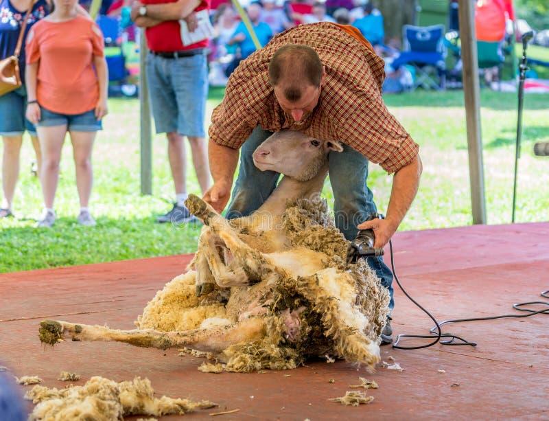 Barani Shearing przedstawienie zdjęcie royalty free