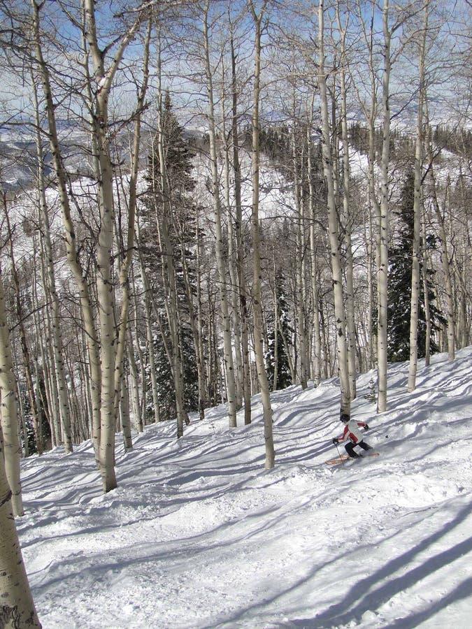 baraspens narciarka jej samotny sposób wyplata fotografia stock