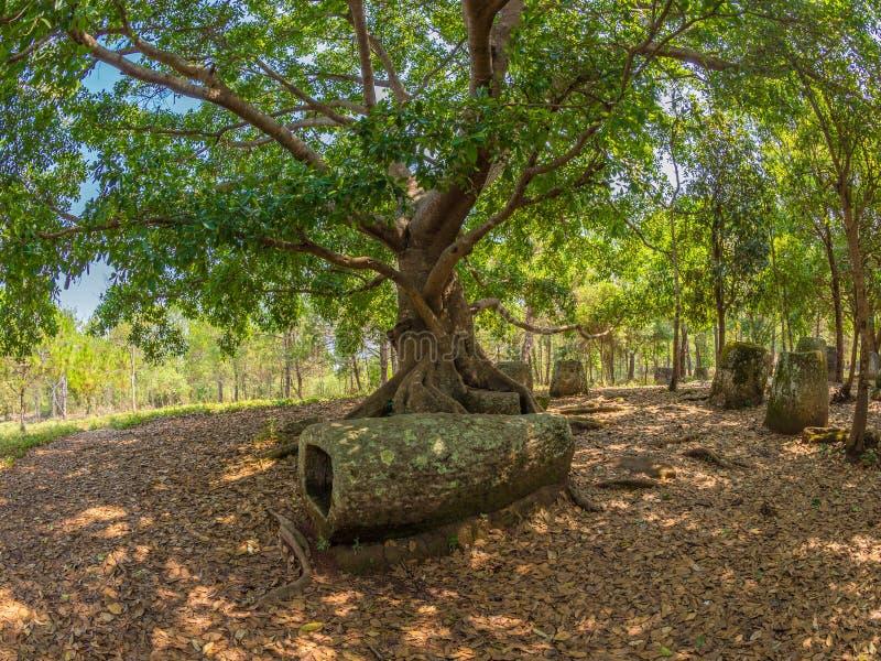 Barattoli giganti della pietra di età del ferro in radura boscosa Plateau di Xiangkhoang, fotografia stock libera da diritti