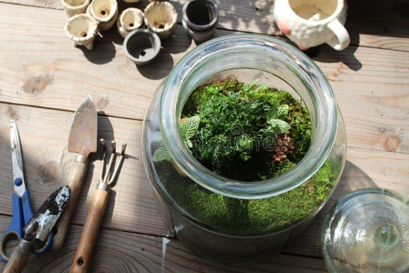 Barattolo del vetro trasparente del terrario con muschio e la pianta fotografie stock libere da diritti