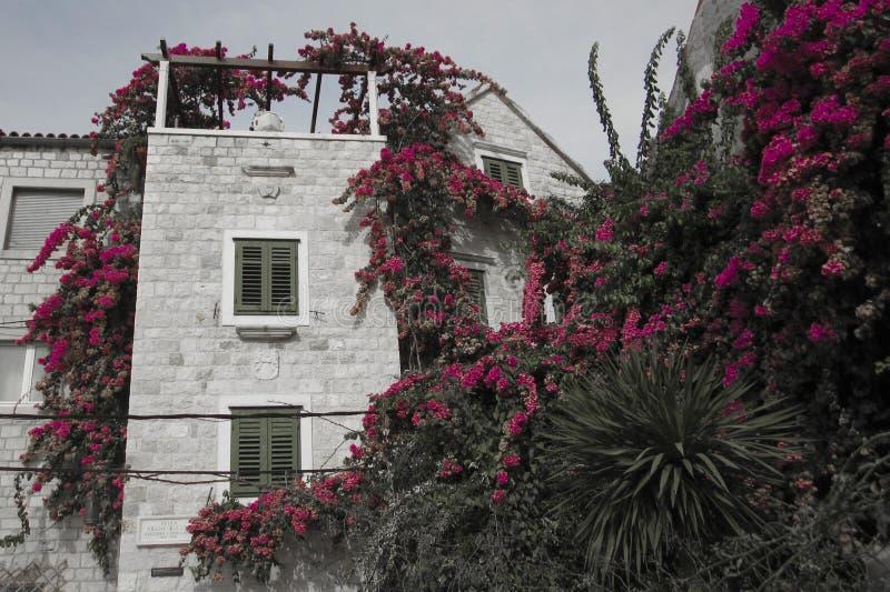 Barattolo in giardino fotografia stock libera da diritti