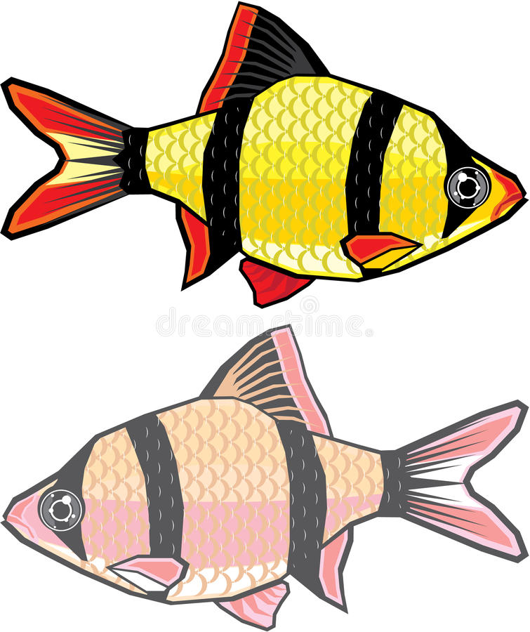 barb aquarium fish stock vector illustration of nature 49277557 rh dreamstime com Perch Fish Clip Art Quality Walleye Fish Clip Art