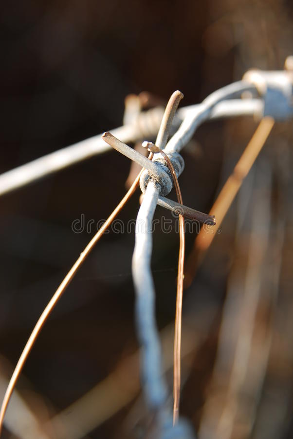 Download Barb wire stock photo. Image of defending, army, metal - 11977406