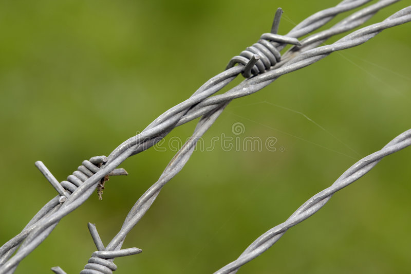 Download Barb wire stock photo. Image of fence, death, nature, concentration - 9100690