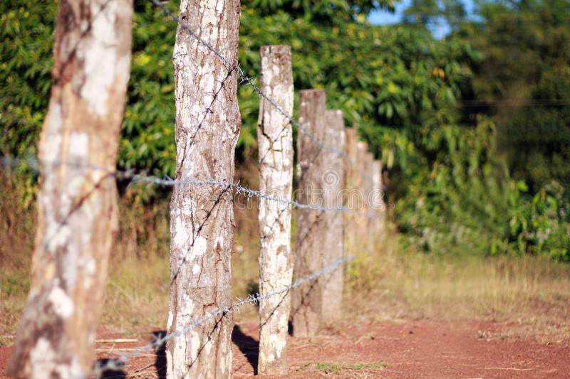 Download Barb wire Fence stock image. Image of barb, steel, twisted - 23767551