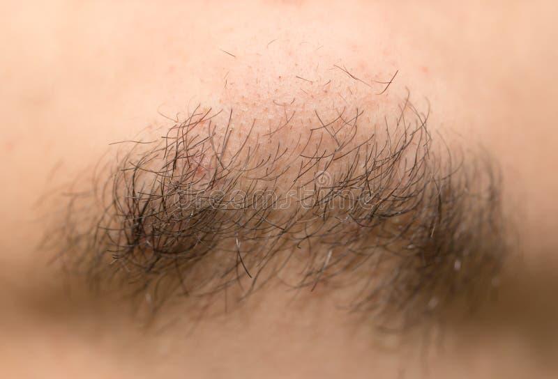 Barba vieja de siete días Barba vieja de siete días en un varón caucásico Ascendente cercano de la macro fotografía de archivo libre de regalías