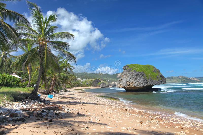 barbados bathsheba plaża fotografia royalty free