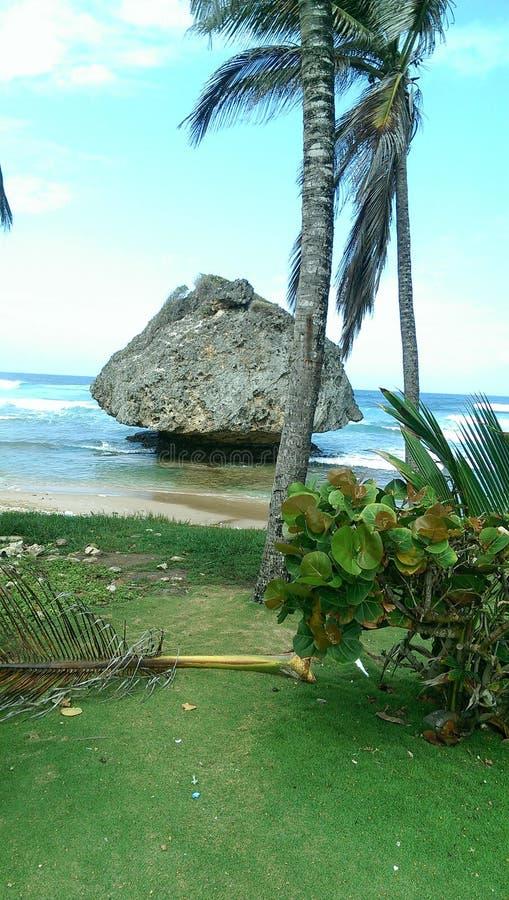 Barbados beaches, Bathsheba rock. Rocky famous beaches of barbados stock photography