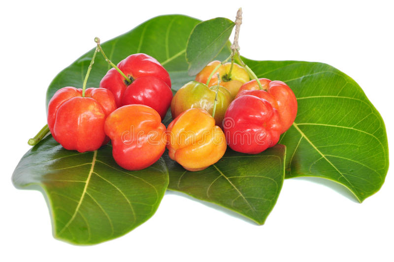 Barbados cherry stock photos