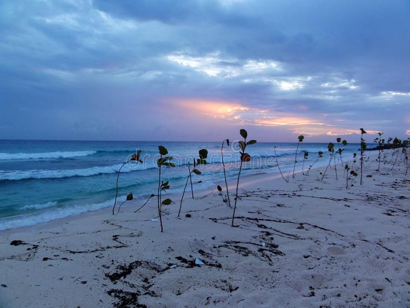 Barbados Gloaming royalty-vrije stock fotografie
