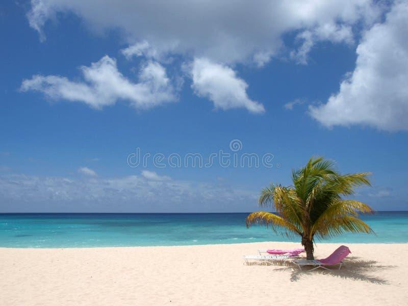barbados strand arkivfoton