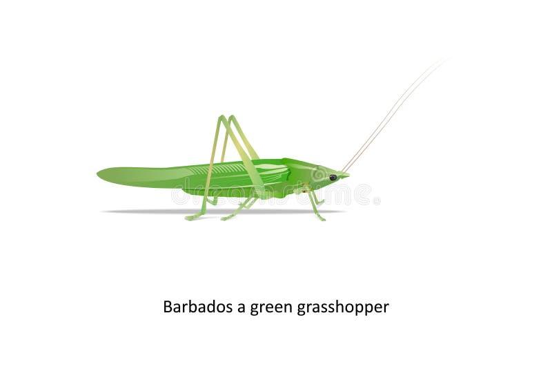 Barbados um gafanhoto verde no fundo branco isolado ilustração stock