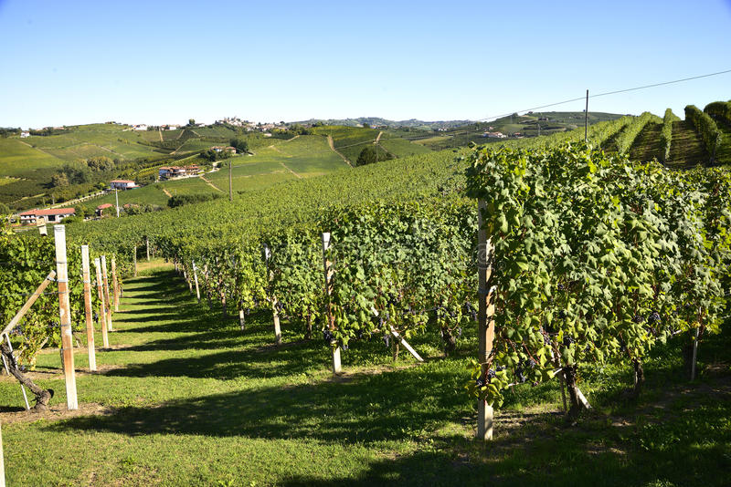 Download Barbaresco Vineyard - Langhe, Piedmont, Italy Stock Image - Image: 60285965