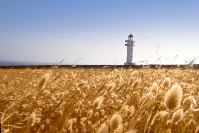 Barbaria Umhangleuchtturm Formentera-goldene Wiese stockfoto
