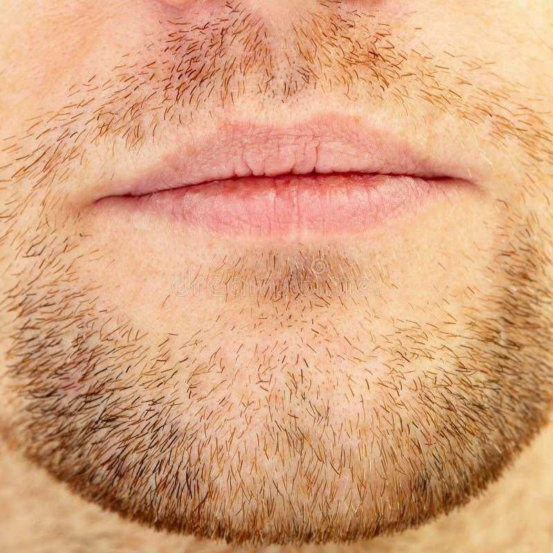 Barbe et languettes photo stock