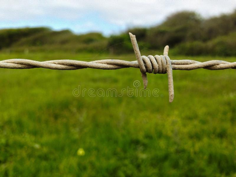 Barbed stock image