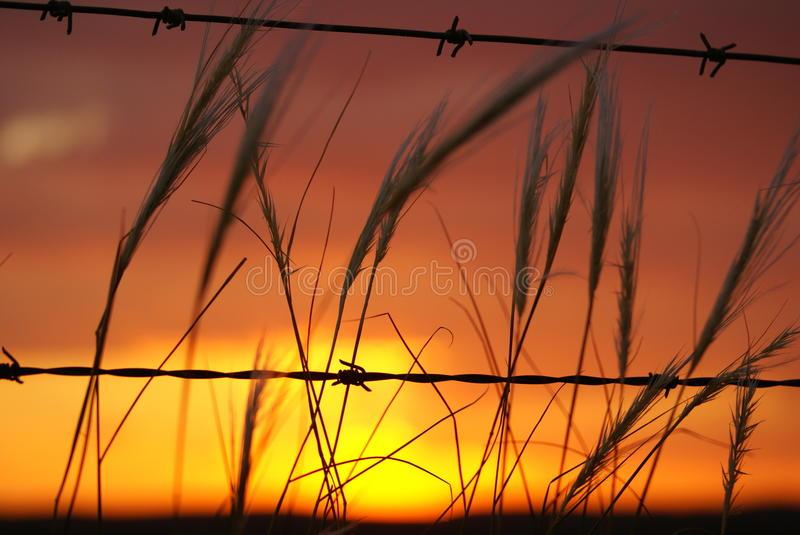 Barbed Sunset royalty free stock photography