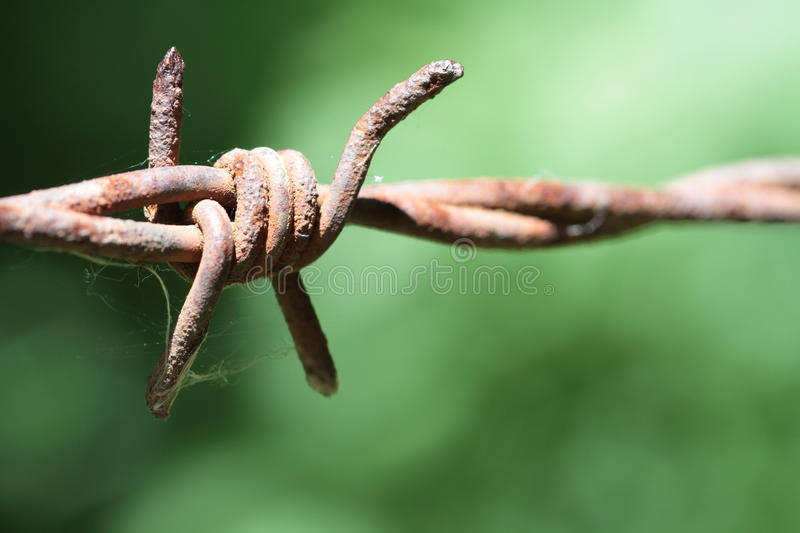 Barbed Wire. With a green background royalty free stock image