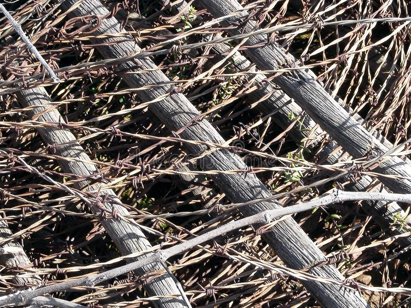 Download Barbed wire stock photo. Image of close, wooden, rolled - 21227822