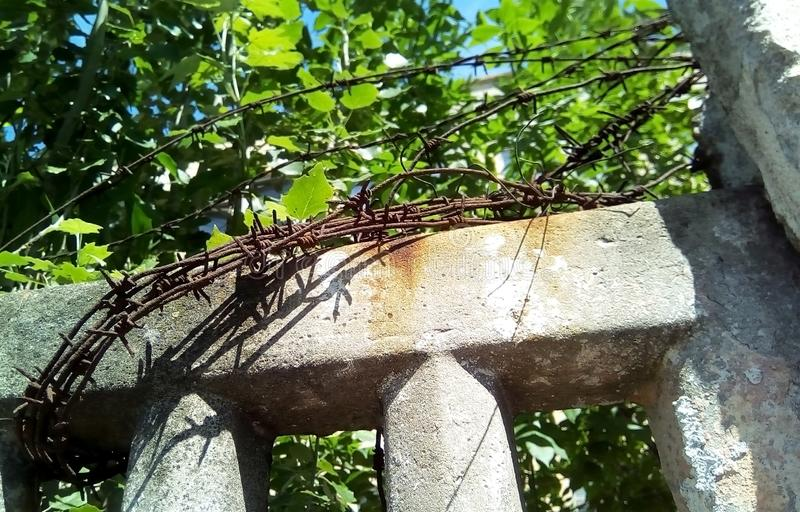 Barbed wire on a concrete fence against the background of green foliage and blue sky. stock photography