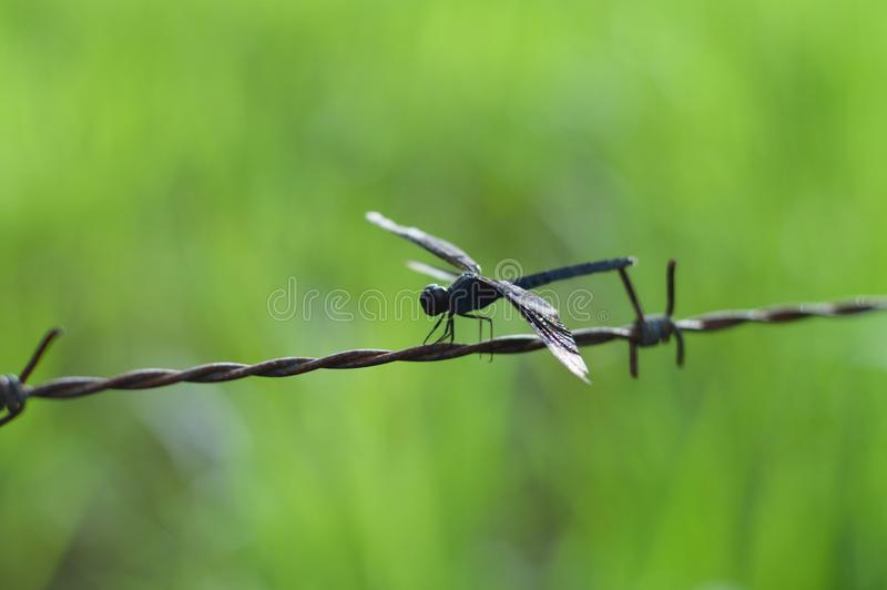 Barbed, Wire, Detail stock photo