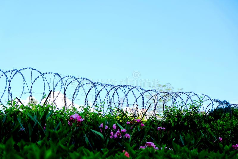 Barbed wire fence stock image. Image of connect, terror - 117517291