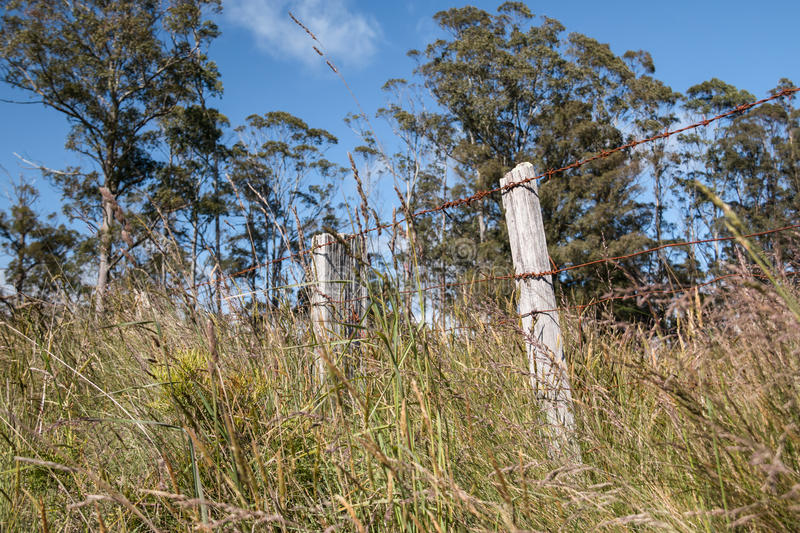 Barbed wire fence in long grass royalty free stock photos