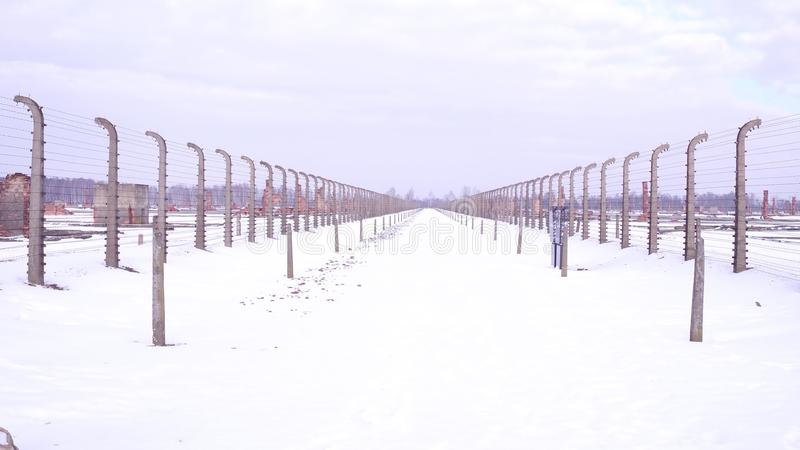 Between barbed wire fences of destroyed concentration camp in winter. Emptiness and destruction concepts royalty free stock photography