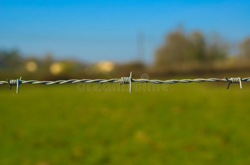 Barbed wire in front of one ground of campaign. royalty free stock image