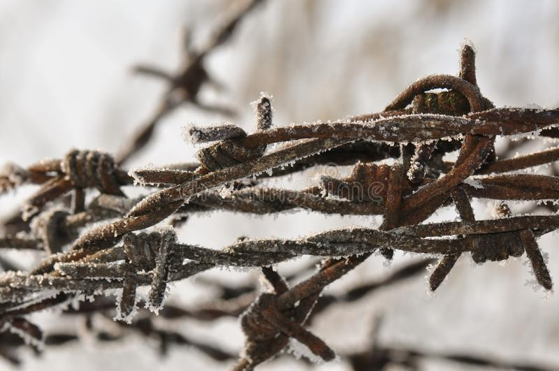 Barbed wire with ice crystals stock images