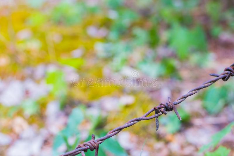 Barbed wire isolated on a blurry forest background stock photo