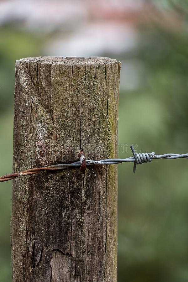 Barbed Wire in a Log on a Cloudy Day royalty free stock photo