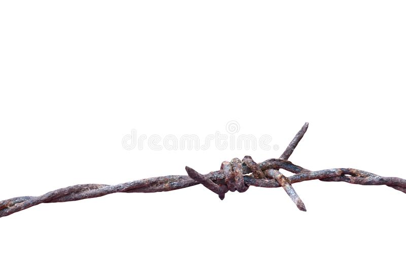 Barbed wire rust old isolated on white background, barbed wire rusty meaning to incarcerate, imprison, detention center royalty free stock photo