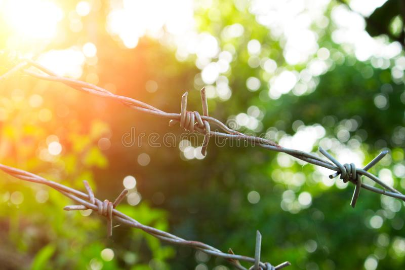 Barbed wire in sunny day. Sunny nature behind barbwire. Protective fence around tropical garden stock images