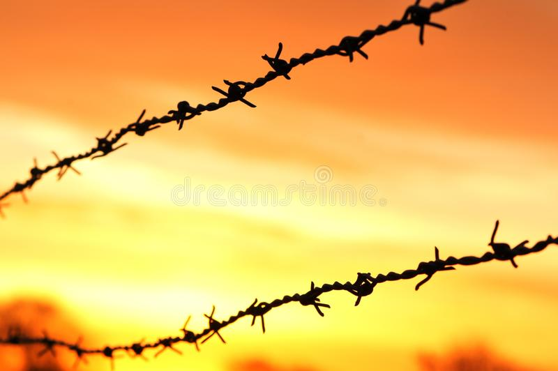 Barbed wire at sunrise stock photos