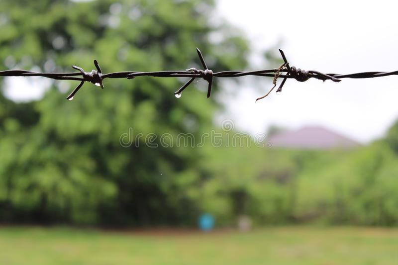 Barbed wire with water drop in the rainy day. stock image