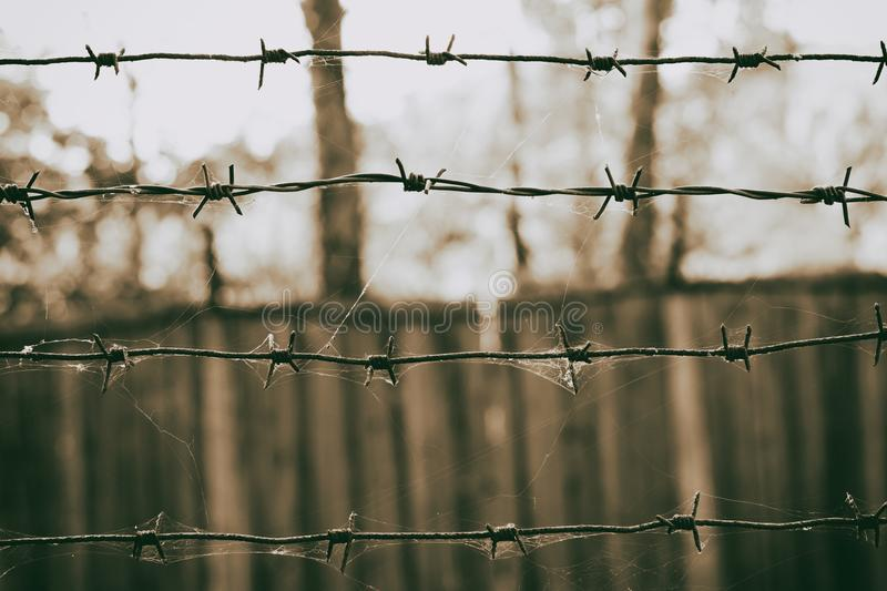 Barbed wire in a web on the background of a wooden fence, sepia photo royalty free stock images