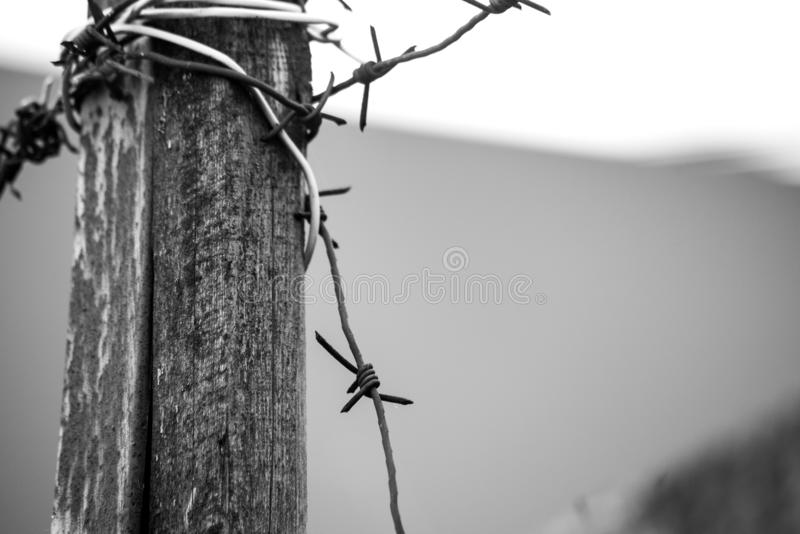 Barbed wire wrapped around a wooden pole royalty free stock images