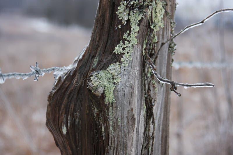 Barbelé d'hiver photographie stock